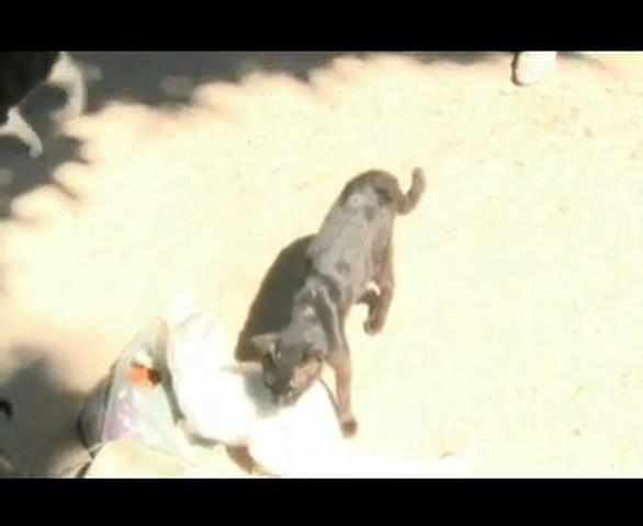 Cerca de trinta filhotes de gatos foram mortos próximo à Lagoa da Maraponga, na última terça-feira (19/08).