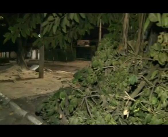 Uma árvore centenária virou o esconderijo preferido de ladrões que assaltam no bairro