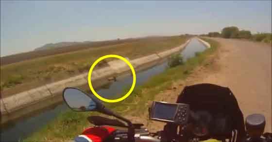 Motociclista vê algo estranho na água e o que acontece depois... vai deixar-te em lágrimas!!